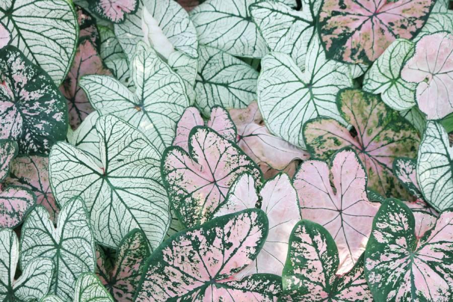 papel tapiz de hojas